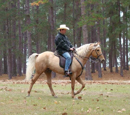 Tennessee Walking Horses Cloud 9 Walkers Tennessee - 500×441