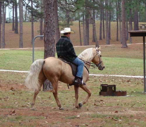 Tennessee Walking Horses Cloud 9 Walkers Tennessee - 500×436