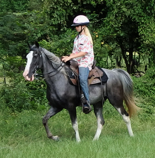 Tennessee Walking Horses Cloud 9 Walkers Tennessee - 500×507