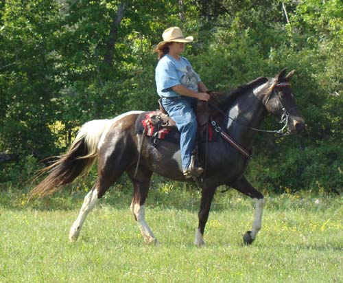 Tennessee Walking Horses Cloud 9 Walkers Tennessee - 500×412