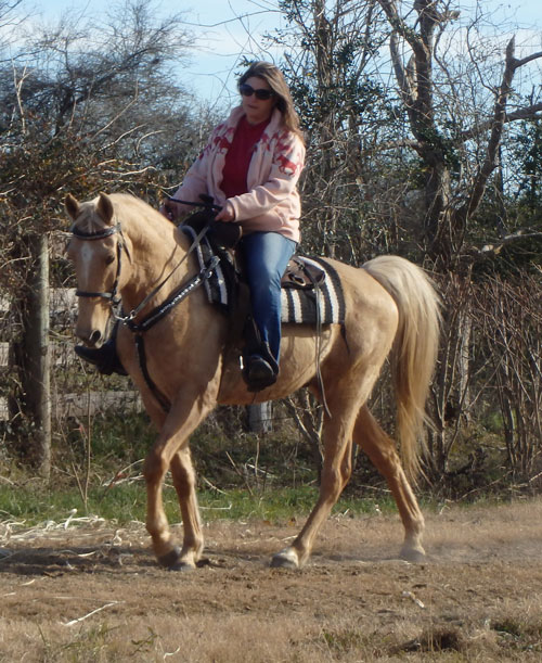 Tennessee Walking Horses Cloud 9 Walkers Tennessee - 500×611