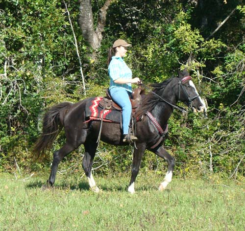 Tennessee Walking Horses Cloud 9 Walkers Tennessee - 500×472